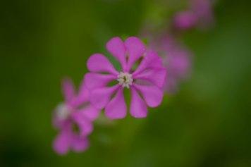violet green